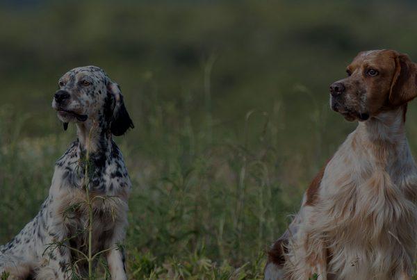 funcasbiod fundacion caza sostenible biodiversidad