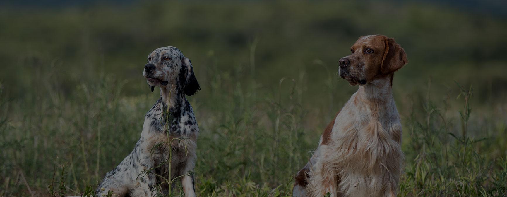 Primer estudio socioeconómico de la caza en Euskadi